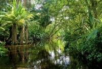 How to get to Amacayacu National Park in the Amazon and all the information you need to know
