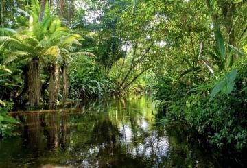 Cómo llegar al Parque Nacional Natural Amacayacu en el Amazonas y toda la información que debes saber
