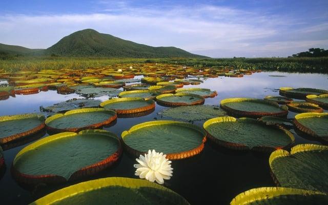 Reserva Natural Flor de Loto