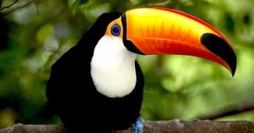 Avistamiento de aves en el Amazonas colombiano