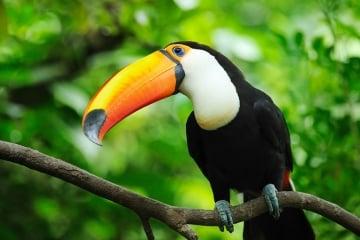 Lugares para hacer avistamiento de aves en Santa Marta