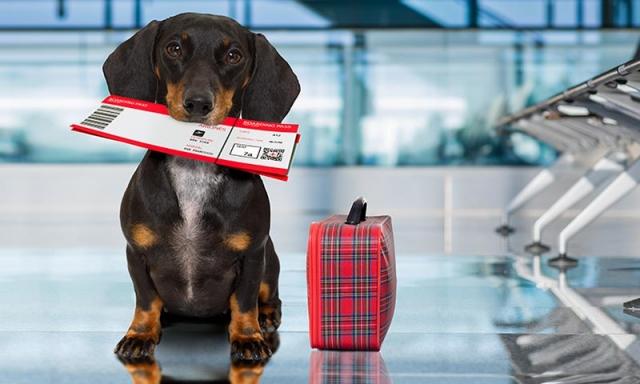 Requisitos para viajar con mascotas hacia dentro y fuera de Colombia