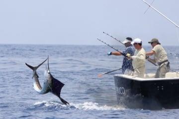 Reglamentación y veda para la pesca deportiva en Colombia