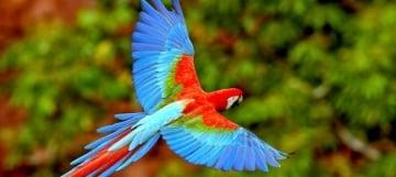 Avistamiento de aves en Colombia, conoce las ciudades con la mayor cantidad de especies