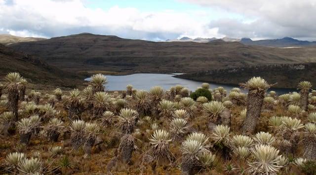 Los mejores páramos en Colombia que merecen ser visitados