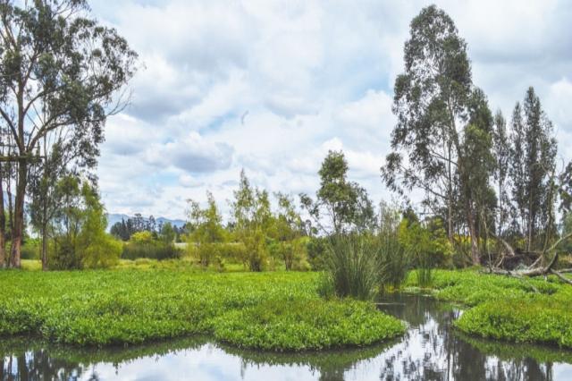 Conoce los humedales en Colombia que son de gran importancia para el mundo