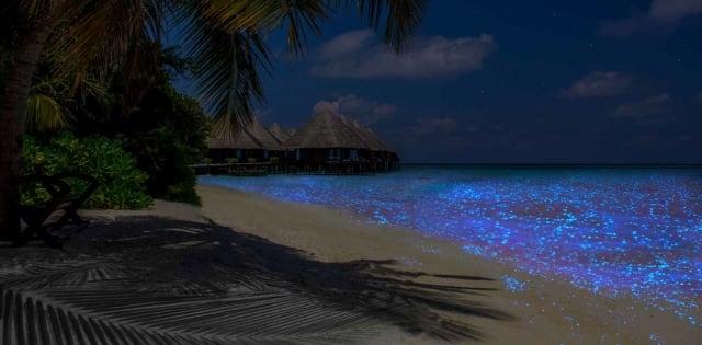 Playas bioluminiscentes