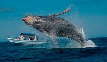 Destinos para hacer avistamiento de ballenas en Colombia