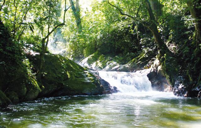 Slow Travel en Colombia - Minca