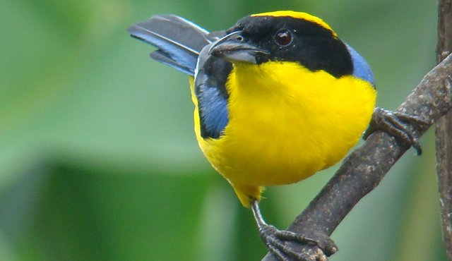 Por qué hacer avistamiento de aves en la Sierra Nevada de Santa Marta