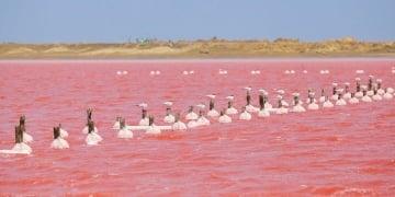 Cómo llegar a Galerazamba, La playa rosada de Colombia que está en Bolívar
