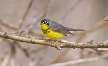 Colombia BirdFair 2020: qué es, cuándo es, dónde es, programación
