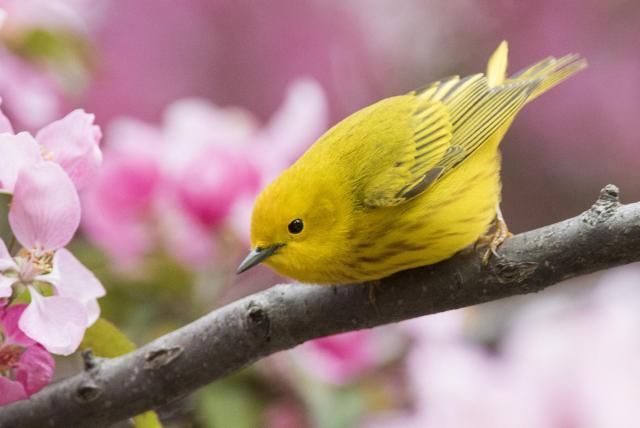 colombia birdfair