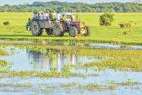Safari llanero: Un increíble viaje a las profundidades de los Llanos Orientales