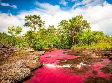 Razones para animarse a viajar y conocer Caño Cristales; el río más lindo del mundo