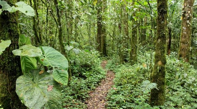 5 bosques en Colombia para conocer, recorrer y amar