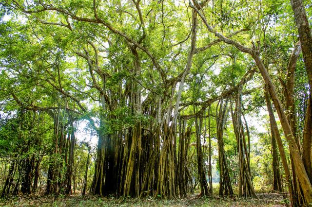 bosques en Colombia