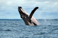 Nuqui whale watching Tour