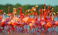 Pink flamingos and rancheria wayuu