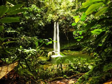 Plan de 3 días al Putumayo: Selva mágica