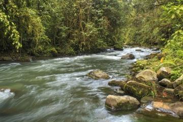 Santuario de flora y fauna, Otún - Quimbaya