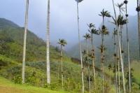Tour al Valle del Cocora
