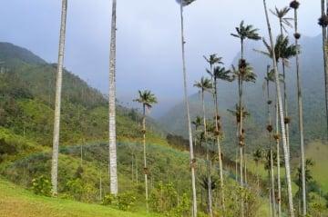Tour Vallée de Cocora